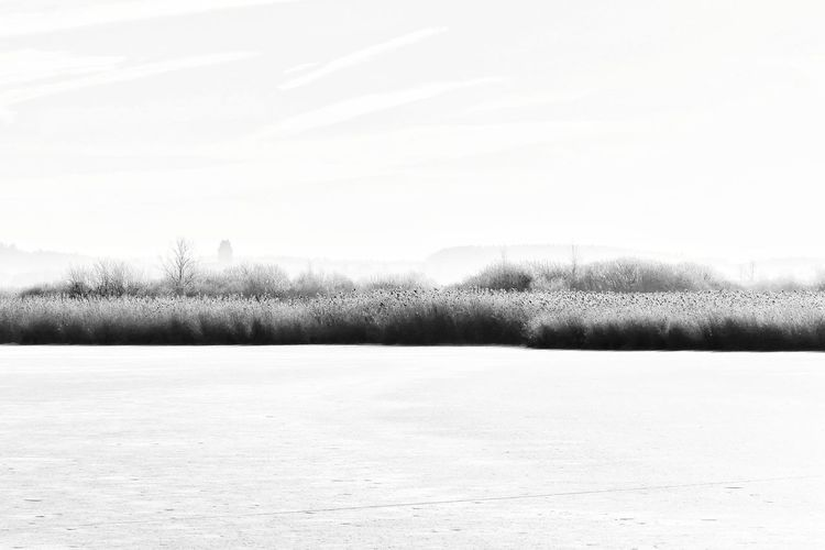 Federsee Non-urban Scene Season  No People Minimalism Outdoors Calm Peace And Quiet Tree Grass Plant Landscape Black And White Tranquility Scenics Black & White Backgrounds Beauty In Nature Winter Cold Frozen Cold Temperature Frozen Lake Frost Ice Covering Countryside Grass Area Frozen Water Blade Of Grass