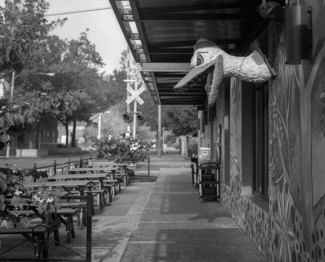 duck on a wall Film Medium Format Film Koni-omega Film Photography Medium Format Architecture