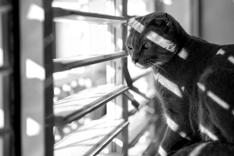 Close-Up Of Cat Sitting Indoors