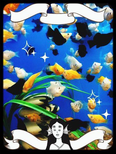 Fish Mollies