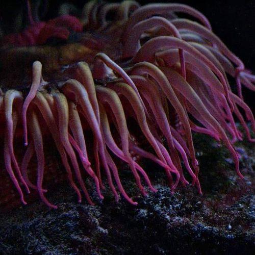 An-nen-oh-mee 🐙🐠🐳 Findingnemo Lowlight Nofilter Newenglandaquarium Oceanlife Creature