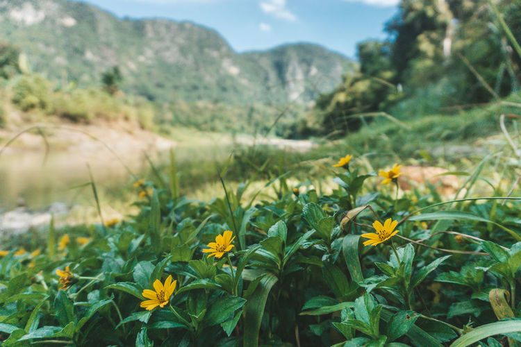 Beauty In Nature Close-up Day Field Flower Flower Head Flowering Plant Focus On Foreground Fragility Freshness Green Color Growth Land Landscape Mountain Nature No People Outdoors Plant Vulnerability  Yellow A New Beginning