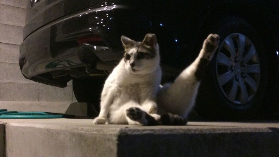 夜ねこ 野良猫 Stray Cat