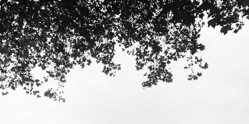 Sky Minimalist EyeEm Nature Lover Monochrome