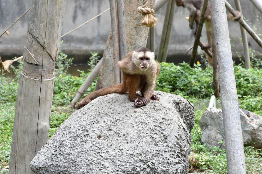 Little monkey , so sweet!