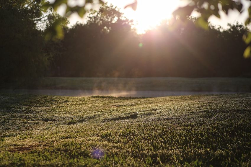 Beauty In Nature Lens Flare Morning Mist Nature Outdoors Sun Sunlight Tranquil Scene Tranquility
