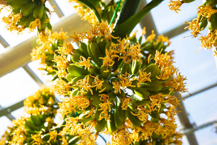 Low angle view of yellow flowering plants