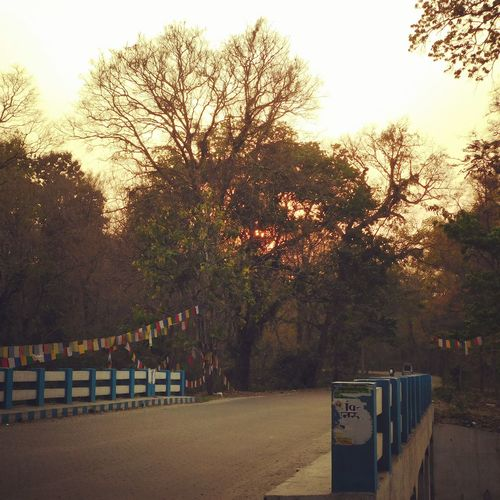 sunset Blvd Forest Bridge Sinic_photography Scenery Photography Landscape Tree Sky