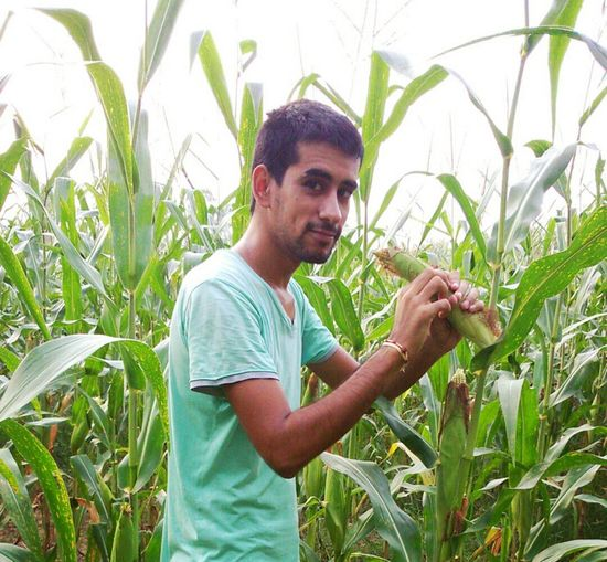 Hi! That's Me Enjoying Life Hello World Maize Corn Ears Green Leaves Green Green Color Greenleaves Photography Photooftheday Photo Photoshoot Photo Of The Day Maize Field Maizefield Maize Plant Leafs