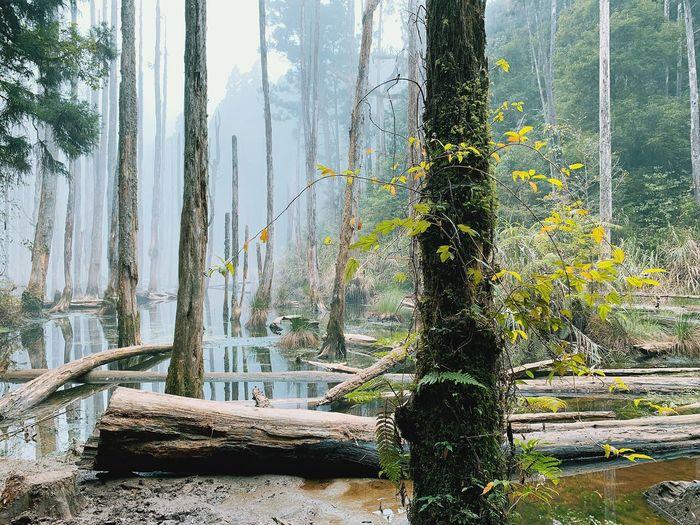 森林 忘憂森林 Plant Tree Growth Nature Day No People Green Color First Eyeem Photo