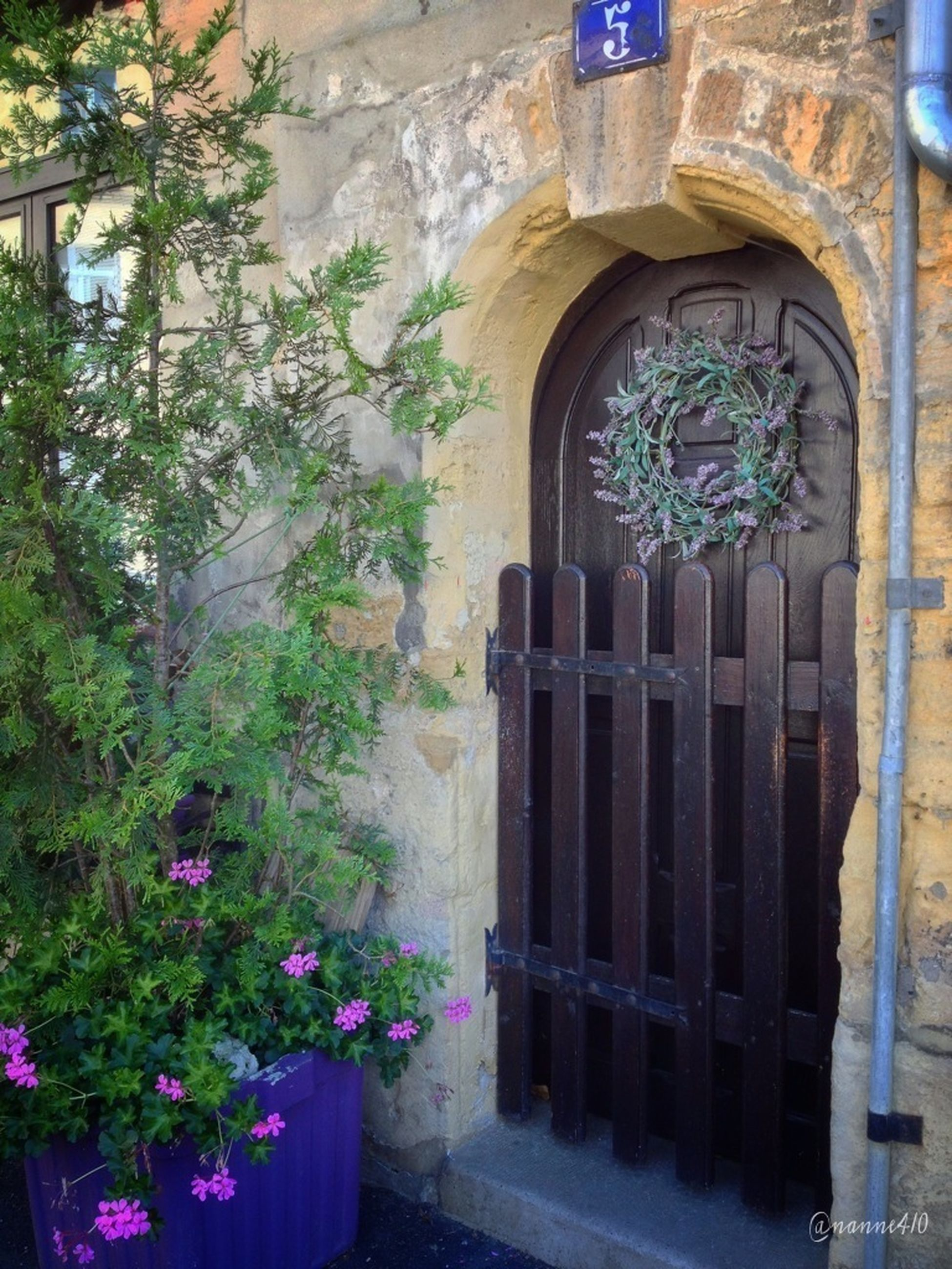 architecture, built structure, building exterior, plant, flower, growth, arch, potted plant, wall - building feature, house, window, entrance, door, day, wall, tree, no people, old, building, outdoors