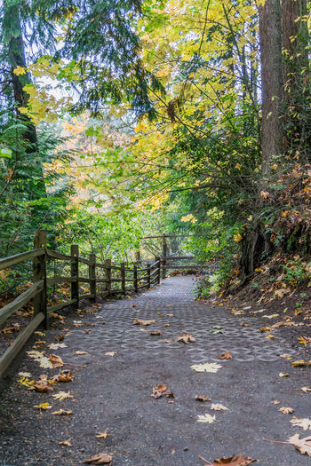 A trail at