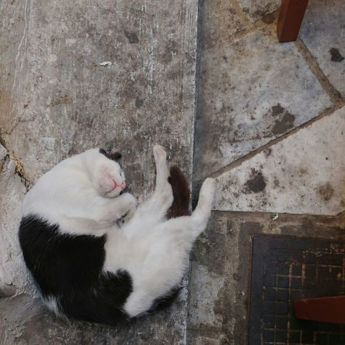 Nap time. Taking Photos Cats Of EyeEm Cats Travelphotography Catsofgreece Catnap
