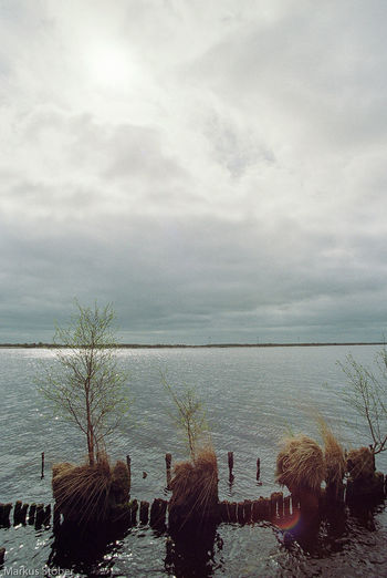 Am ewigen Meer Animal Themes Beauty In Nature Cloud - Sky Day Horizon Over Water Mammal Nature No People Outdoors Scenics Sea Sky Tranquility Tree Water