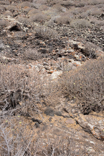 High angle view of dry plants on land