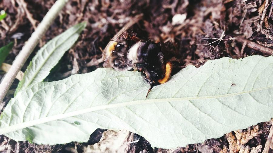 In Garden Bee Mating Borrowash