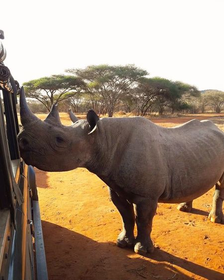 No one in the world needs a rhino horn but a rhino. EyeEmNewHere