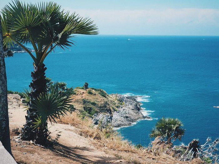 Palm Tree Sea Beach Cliff