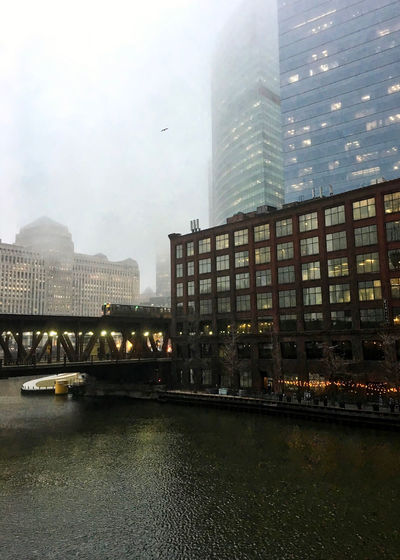 """Foggy Chicago evening as elevated """"el"""" train passes over the river and a bird flies overhead. Chicago Chicago El Chicago Loop Elevated Track Moving Rush Hour Transit Transportation Architecture Bird Bridge Bridge - Man Made Structure Building Exterior Built Structure City Cityscape Commute Elevated Train Flying Flying Bird Lake Street Seagull Sky Skyscraper Water"""