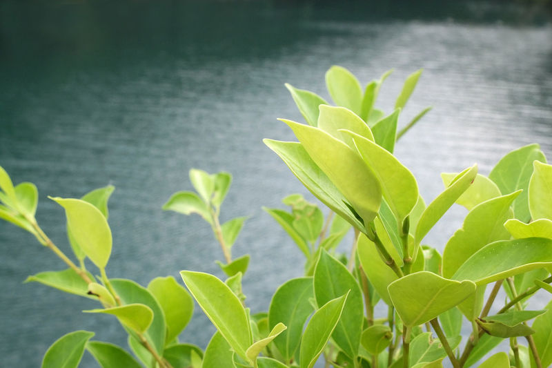 Beauty In Nature Close-up Day Focus On Foreground Green Color Growth Leaf Nature No People Plant Tai Tam Reservoirs