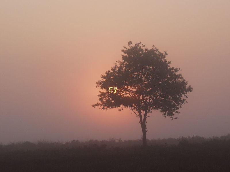 Atmosphere Atmospheric Mood Beauty In Nature Foggy Morning Foggy Sunrise Horizon Over Land Landscape Light Majestic Misty Morning Misty Mornings Misty Sunrise Outdoors Overcast Peek A Boo Peekaboo Peeking Peeking Through Scenics Silhouette Sky Tranquil Scene Tranquility Treeporn Lover Weather