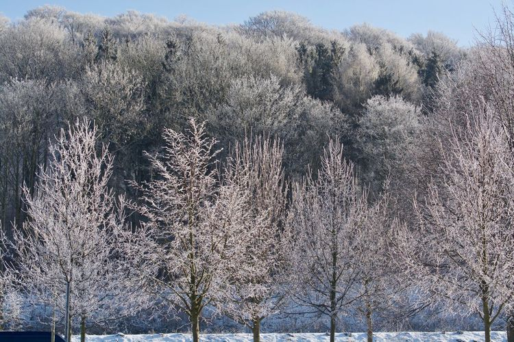 Landscape_Collection Bare Tree Beauty In Nature Branch Cold Temperature Day Growth Land Landscape Landscape_photography Landscapes Nature No People Non-urban Scene Outdoors Plant Scenics - Nature Sky Snow Tranquil Scene Tranquility Tree Winter