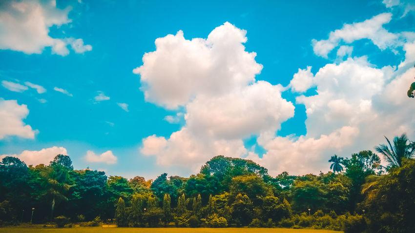 EyeEm Selects Gettyimages EyeEm Nature Lover EyeEm Best Shots Tree Multi Colored Blue Pattern Forest Sky Cloud - Sky Landscape