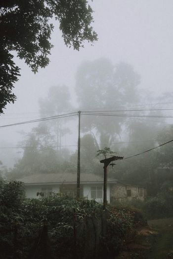 Lintau, 2018 Tree Plant Nature Fog Sky No People Outdoors Built Structure Water Fence Wet Day Architecture Barrier Growth Cable Rain Boundary Land My Best Travel Photo