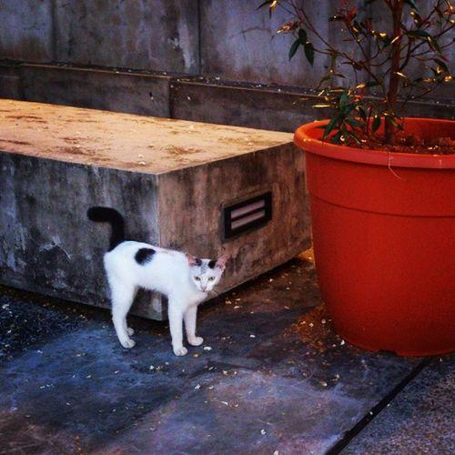 Enter The Cat City Isn't he cute. miao miao... Cats Kitten Lunagram Catcity kuching beautiful iloveit instamoments instalove goodevening bless
