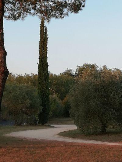 Tree Water Pine