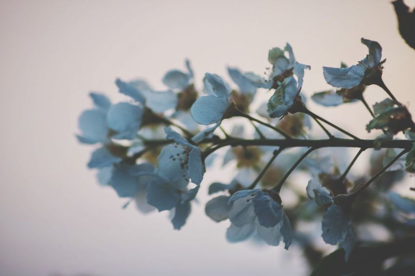 Soft feelings EyeEm Selects Plant Close-up No People Beauty In Nature Nature Growth Focus On Foreground Selective Focus Freshness Flower Flower Head Tree Pattern Flowering Plant