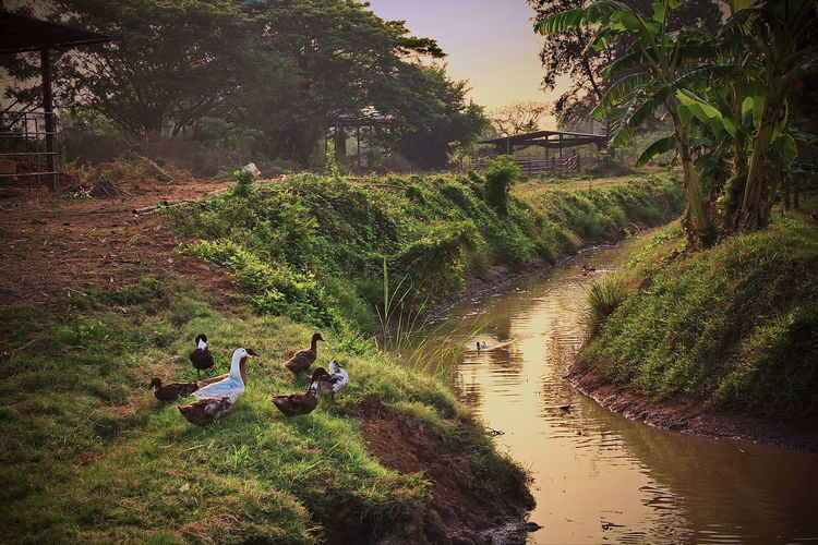 Rural Life In Thailand. Adventure Beauty In Nature Day Full Length Green Color Landscape Nature Outdoors People Rural Scene Scenics Togetherness Tree Vacations Water