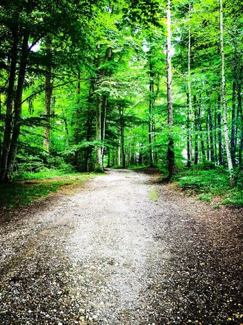 One way Nature Forest Beauty In Nature Tree Tranquility Outdoors Scenics Tranquil Scene Green Color The Way Forward Day Growth No People Landscape Tree Trunk Road