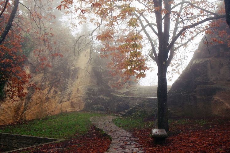 Autumn Beauty In Nature Europe Nature No People Outdoors San Marino San Marino Country.... Tranquility Tree