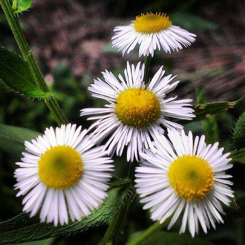 Macro Beauty Flower Petal Petals Flowers Astrid