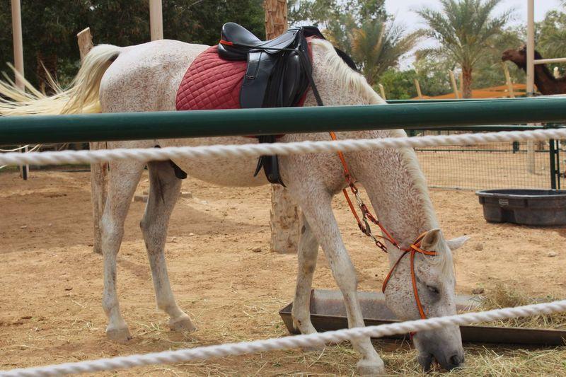 😍 Domestic Animals Mammal Animal Animal Themes Domestic Vertebrate Pets Animal Wildlife Nature Working Animal Day Saddle Clothing Horse Herbivorous Camel Land One Animal Livestock Plant