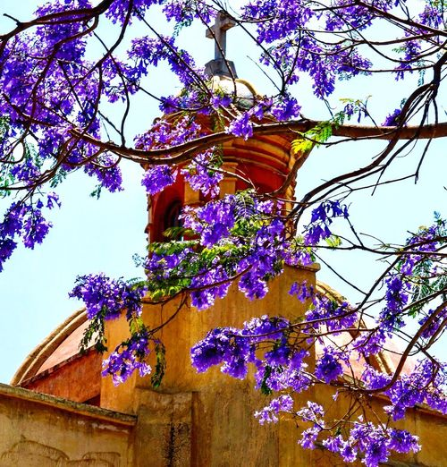 EyeEm Nature Lover EyeEmNewHere City Scape This Is México Mexico City Mexico Jacaranda Plant Low Angle View No People Day Branch Nature Tree Growth Flowering Plant Flower Architecture Sky Decoration Building Exterior Sunlight Beauty In Nature This Is Latin America The Traveler - 2018 EyeEm Awards
