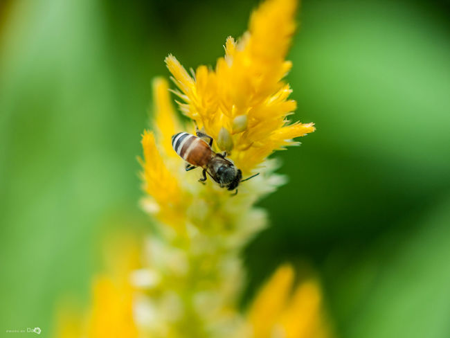 Macro Animals In The Wild Art Arts Culture And Entertainment Bee Insect Macro Macro Photography Nature No People One Animal Outdoors
