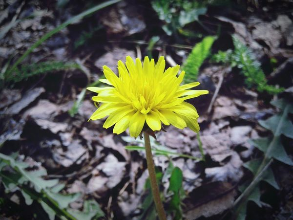 Lemon By Motorola Yellow Flower