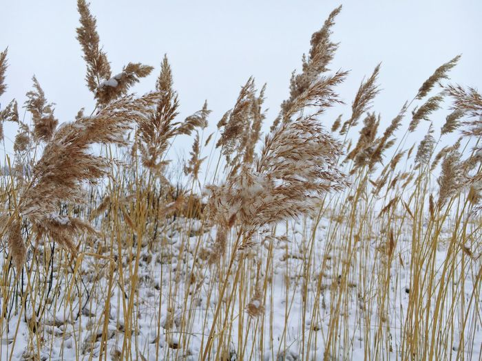 Nature Field Winter Wintertime Winterscapes Winterwonderland