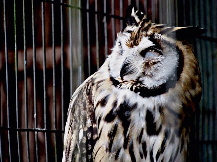 Close-up of owl in cage