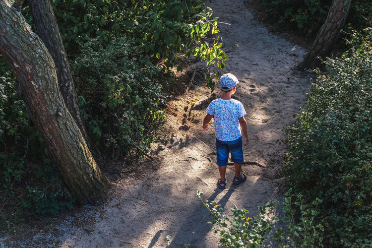 High angle view of boy standing on sand amidst trees