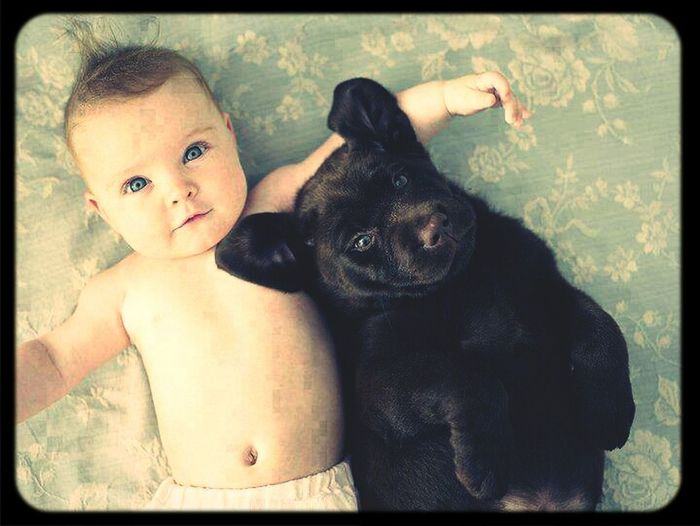 sweet Dog And Baby Dogs DogLove