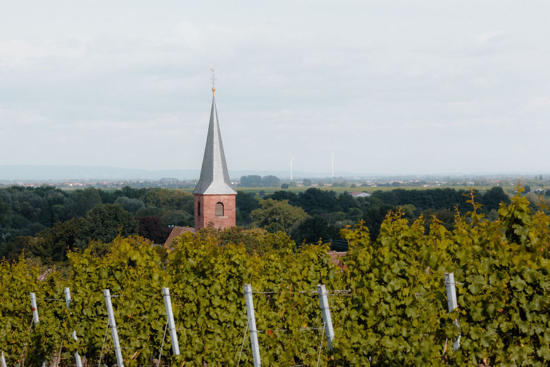 Church Steeple Architecture Built Structure Church Church Steeple Forst Green Color Growth Landscape Pfälzerwald Rural Scene Scenics Sky Steeple Tall - High Tranquility Village Vine Vine Stock Vineyard