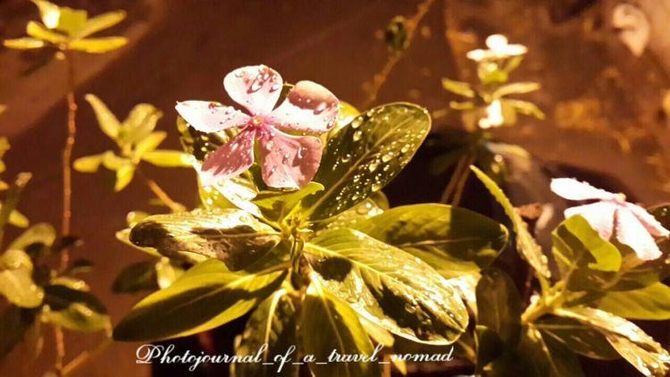 Love of nature creates beauty ... Eyeem Pure Shot EyeEm No Edits Flowergram EyeEm Flower Flower Collection Lovestory Shutterlicious Flowers Bloom Under Rains Naturewhisperers EyeEm Nature Lover