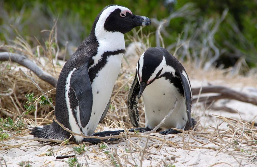 Pinguine Penguin Birds Bird Animals Animal EyeEm Animal Lover Eye4photography  EyeEm Best Shots Pinguin Pinguine
