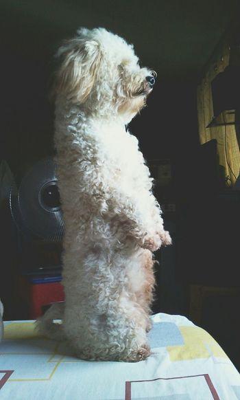 Hey Willow I Love My Dog Dog