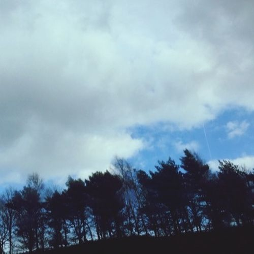 Trees on On The M1 Motorway  To Derby .