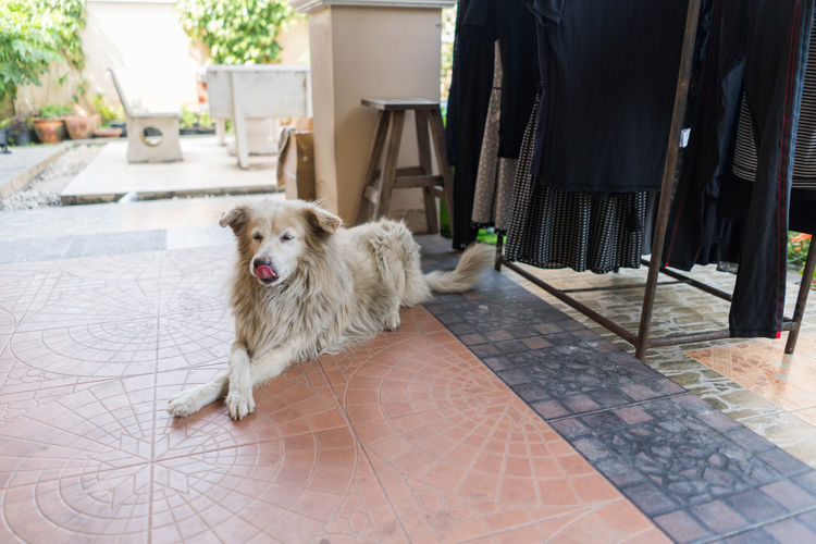 Canine Day Dog Domestic Domestic Animals Flooring Looking At Camera Mammal Mouth Open No People One Animal Pets Portrait Standing Tile Tiled Floor Vertebrate