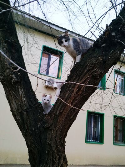 Low angle view of cat on tree against building
